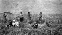 Жатва. Хаврогоры. 1944 г.